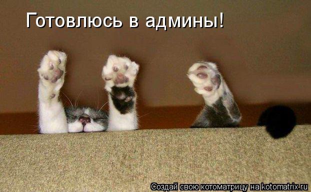 Котоматрица: Готовлюсь в админы!