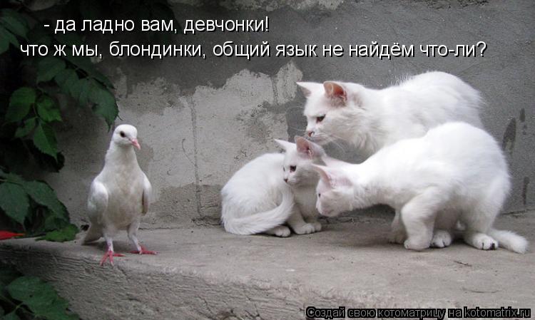 Котоматрица: - да ладно вам, девчонки! что ж мы, блондинки, общий язык не найдём что-ли?