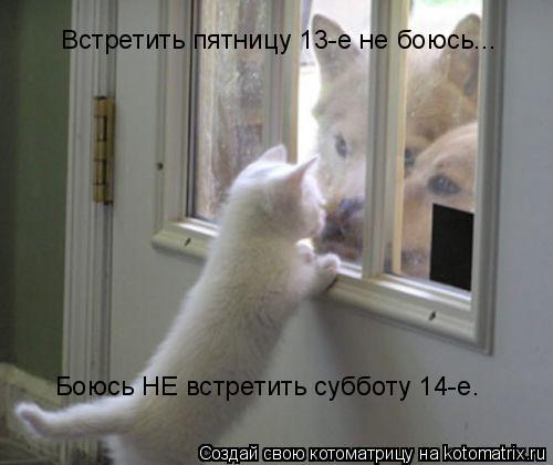Котоматрица: Встретить пятницу 13-е не боюсь... Боюсь НЕ встретить субботу 14-е.