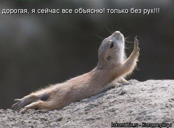 Котоматрица: дорогая, я сейчас все объясню! только без рук!!!