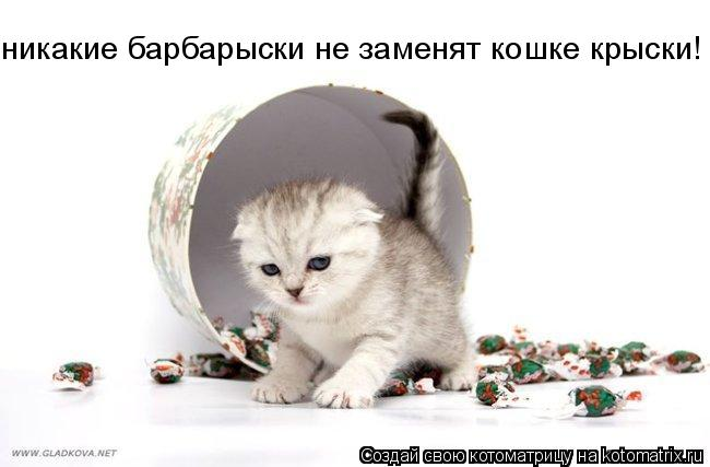 Котоматрица: никакие барбарыски не заменят кошке крыски!