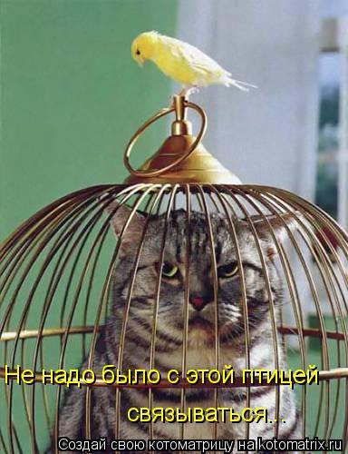 Котоматрица: связываться... Не надо было с этой птицей