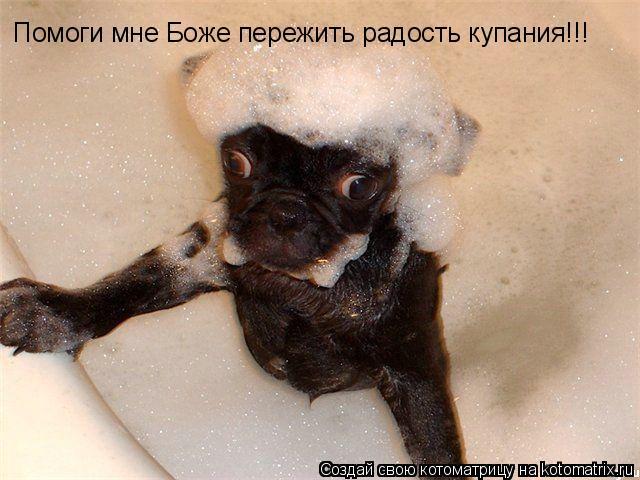 Котоматрица: Помоги мне Боже пережить радость купания!!!