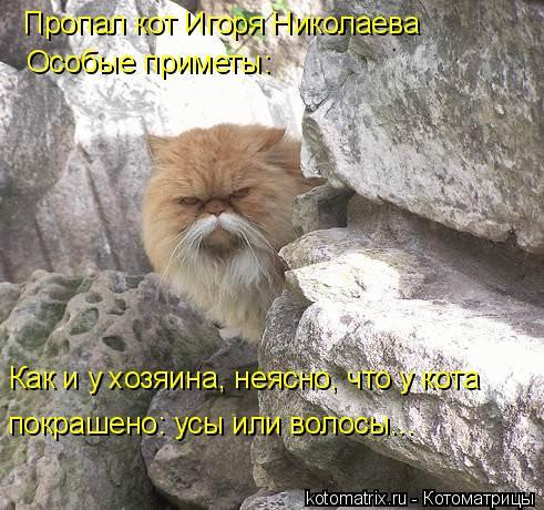 Котоматрица: Пропал кот Игоря Николаева Особые приметы: Как и у хозяина, неясно, что у кота покрашено: усы или волосы...