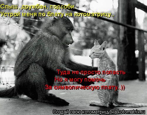 Котоматрица: Слыш, дружбан, подсоби.  Устрой меня по блату на котоматрицу.. Туда не просто попасть  Но я могу помочь  За символическую плату..))