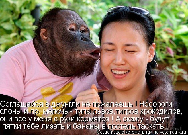 Котоматрица: Соглашайся в джунгли не пожалеешь ! Носороги, слоны и пр. мелочь - типа львов,тигров,крокодилов, они все у меня с руки кормятся ! А скажу - буду