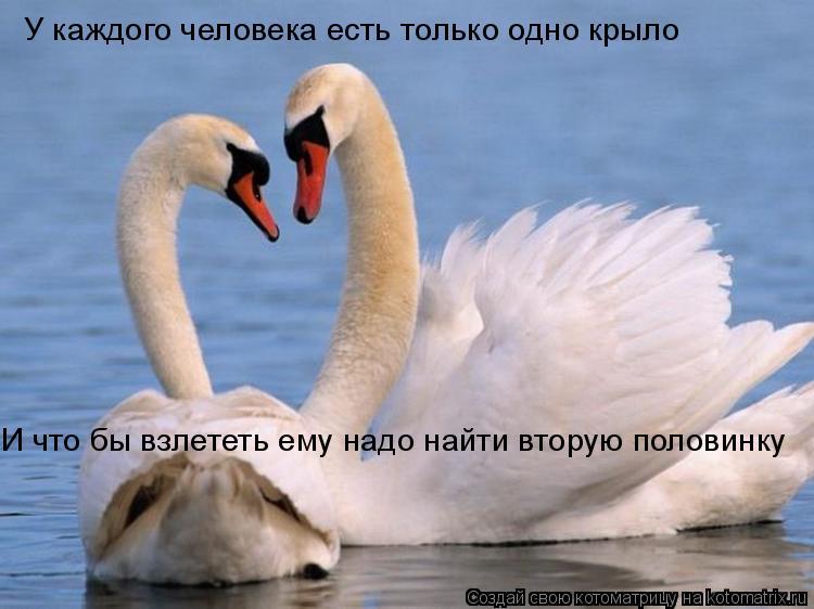 Котоматрица: У каждого человека есть только одно крыло И что бы взлететь ему надо найти вторую половинку
