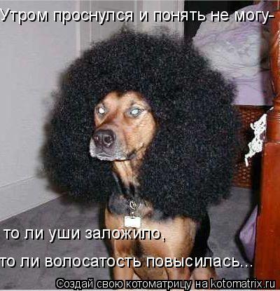 Котоматрица: Утром проснулся и понять не могу- то ли уши заложило, то ли волосатость повысилась...