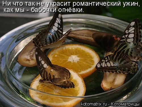 Котоматрица: Ни что так не украсит романтический ужин, как мы - бабочки огнёвки.