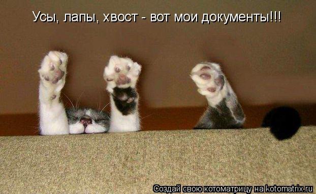 Котоматрица: Усы, лапы, хвост - вот мои документы!!!