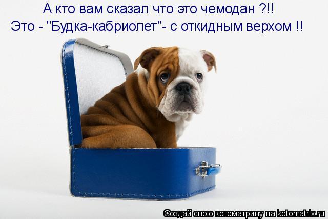 """Котоматрица: А кто вам сказал что это чемодан ?!! Это - """"Будка-кабриолет""""- с откидным верхом !!"""