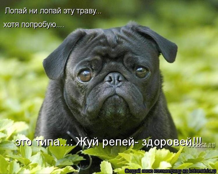 Котоматрица: Лопай ни лопай эту траву... хотя попробую.... это типа...: Жуй репей- здоровей!!!