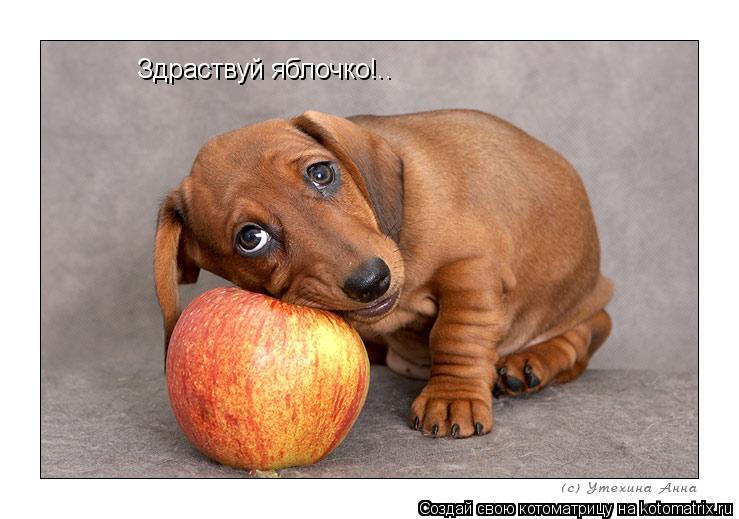 Котоматрица: Здраствуй яблочко!..