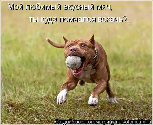 Котоматрица: Мой любимый вкусный мяч, ты куда помчался вскачь?..