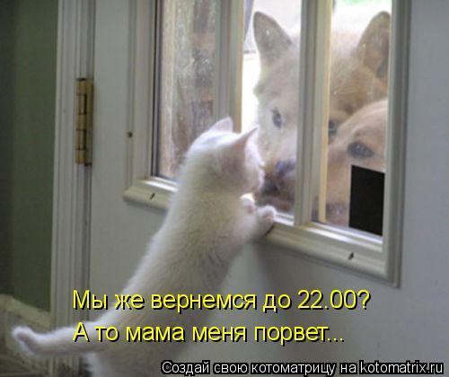 Котоматрица: Мы же вернемся до 22.00? А то мама меня порвет...