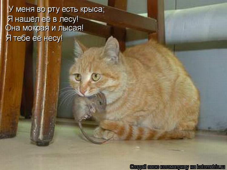 Котоматрица: У меня во рту есть крыса; Я нашёл её в лесу!  Она мокрая и лысая!  Я тебе её несу!