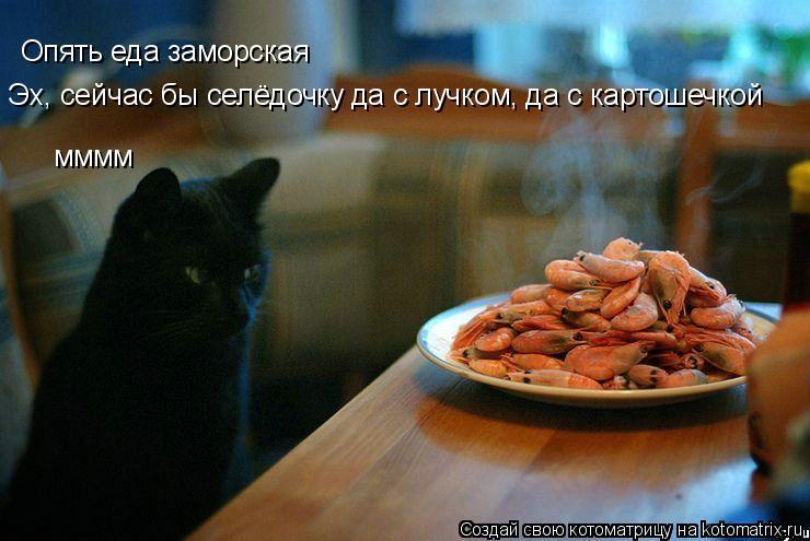 Котоматрица: Опять еда заморская Эх, сейчас бы селёдочку да с лучком, да с картошечкой мммм