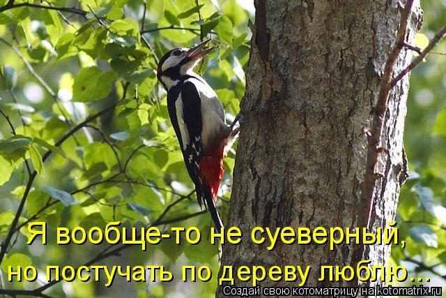 Котоматрица: Я вообще-то не суеверный, но постучать по дереву люблю...