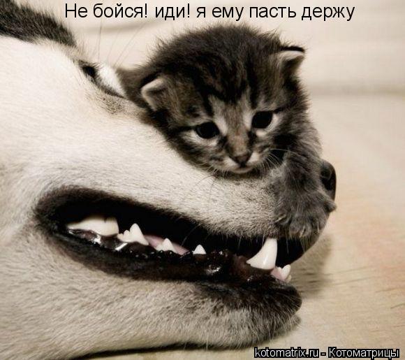 Котоматрица: Не бойся! иди! я ему пасть держу