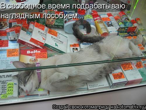 Котоматрица: В свободное время подрабатываю наглядным пособием...