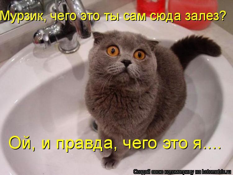 Котоматрица: Ой, и правда, чего это я.... Мурзик, чего это ты сам сюда залез?