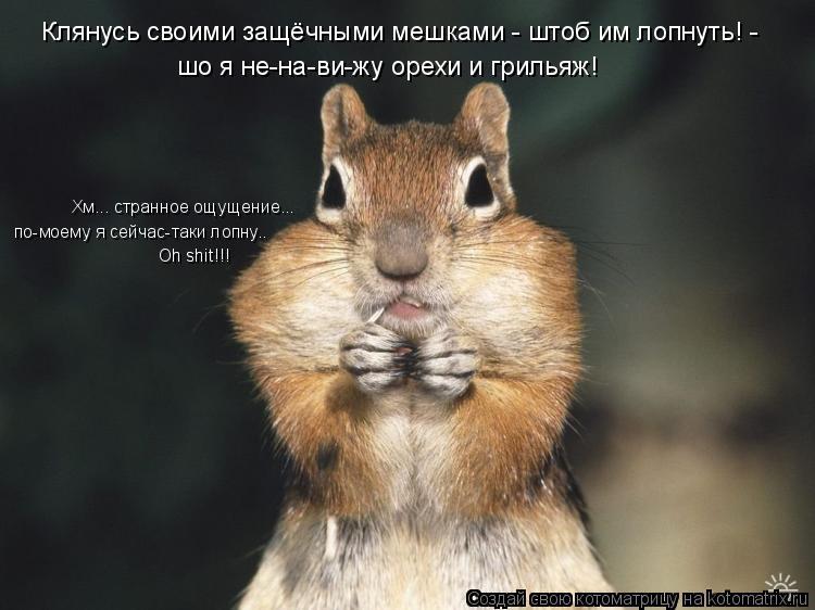 Котоматрица: шо я не-на-ви-жу орехи и грильяж! Клянусь своими защёчными мешками - штоб им лопнуть! -  Хм... странное ощущение... по-моему я сейчас-таки лопну.. O