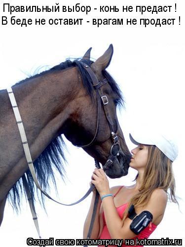 Котоматрица: Правильный выбор - конь не предаст ! В беде не оставит - врагам не продаст !