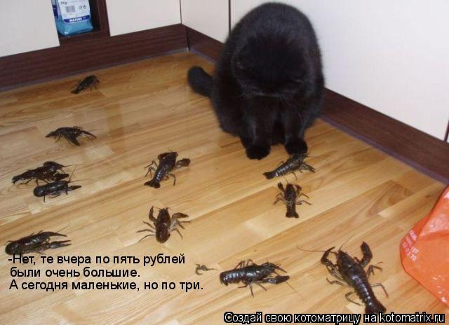 Котоматрица: -Нет, те вчера по пять рублей были очень большие. А сегодня маленькие, но по три.