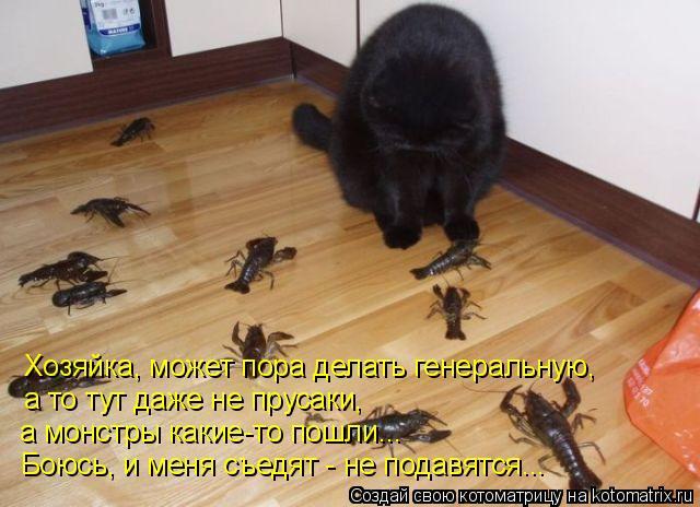Котоматрица: Хозяйка, может пора делать генеральную, а то тут даже не прусаки,  а монстры какие-то пошли... Боюсь, и меня съедят - не подавятся...