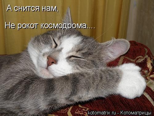 Котоматрица: А снится нам, Не рокот космодрома....