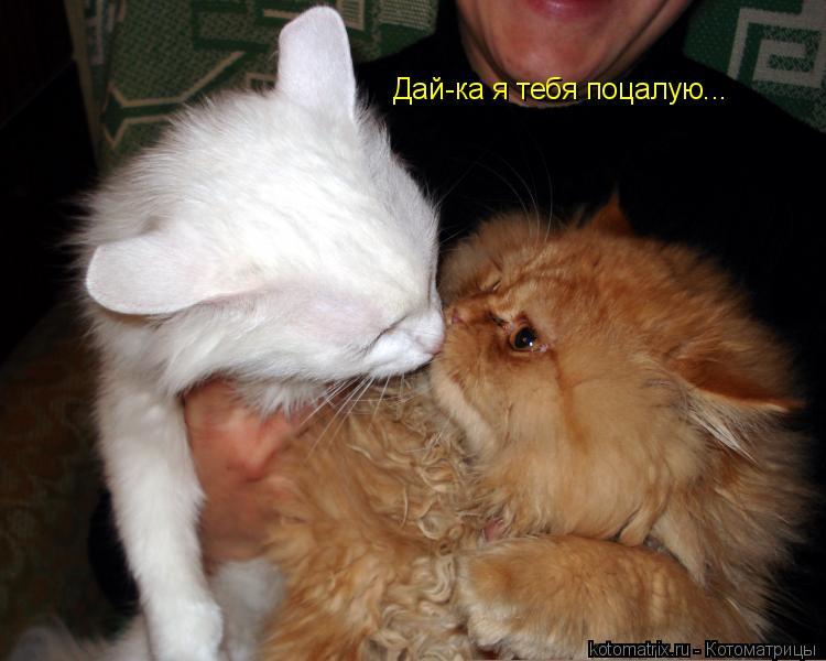 Котоматрица: Дай-ка я тебя поцалую...