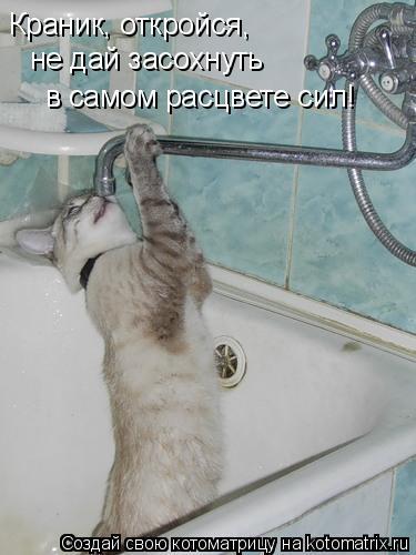 Котоматрица: Краник, откройся, не дай засохнуть  в самом расцвете сил!