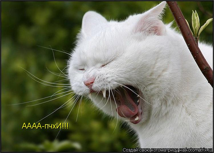 Котоматрица: АААА-пчхИ!!!