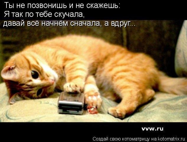 Котоматрица: Ты не позвонишь и не скажешь: Я так по тебе скучала,  давай всё начнём сначала, а вдруг...