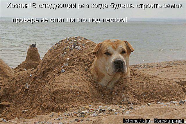 Котоматрица: Хозяин!В следующий раз когда будешь строить замок  проверь не спит ли кто под песком!