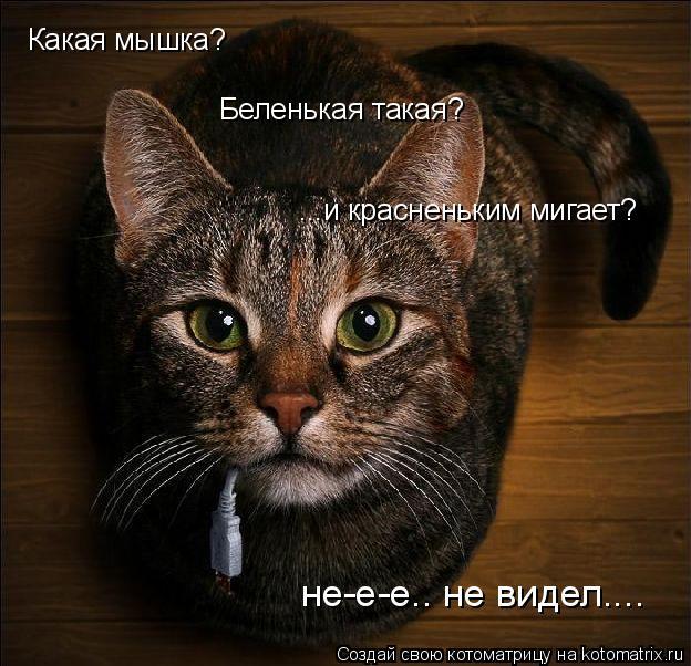 Котоматрица: Какая мышка?  Беленькая такая? ...и красненьким мигает? не-е-е.. не видел....