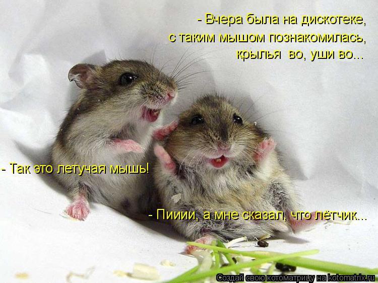 Котоматрица: - Вчера была на дискотеке, с таким мышом познакомилась, крылья  во, уши во... - Так это летучая мышь! - Пииии, а мне сказал, что лётчик...
