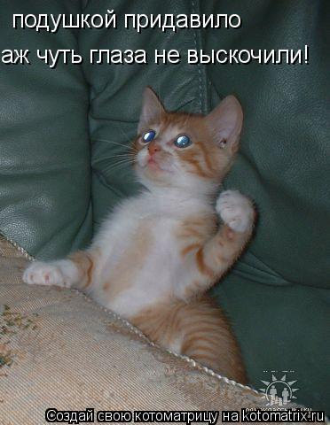 Котоматрица: подушкой придавило аж чуть глаза не выскочили!