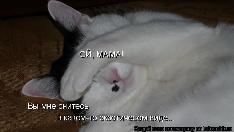 Котоматрица: ОЙ, МАМА!  Вы мне снитесь  в каком-то экзотичесом виде...
