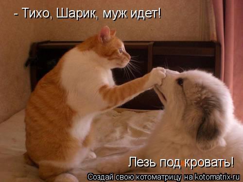 Котоматрица: - Тихо, Шарик, муж идет! Лезь под кровать!