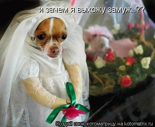 Котоматрица: и зачем я выхожу замуж..??