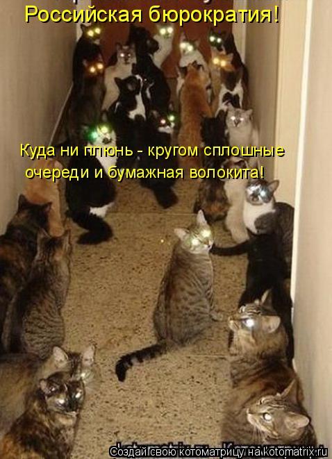 Котоматрица: Российская бюрократия! Куда ни плюнь - кругом сплошные очереди и бумажная волокита!