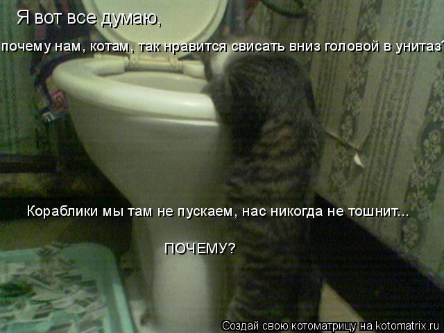 Котоматрица: Я вот все думаю,  Кораблики мы там не пускаем, нас никогда не тошнит... ПОЧЕМУ? почему нам, котам, так нравится свисать вниз головой в унитаз?