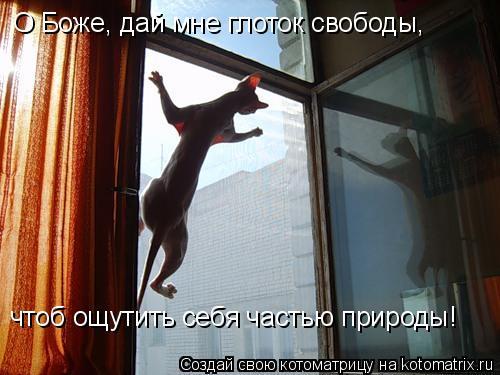 Котоматрица: О Боже, дай мне глоток свободы, чтоб ощутить себя частью природы!