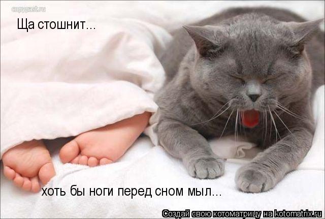 Котоматрица: Ща стошнит... хоть бы ноги перед сном мыл...