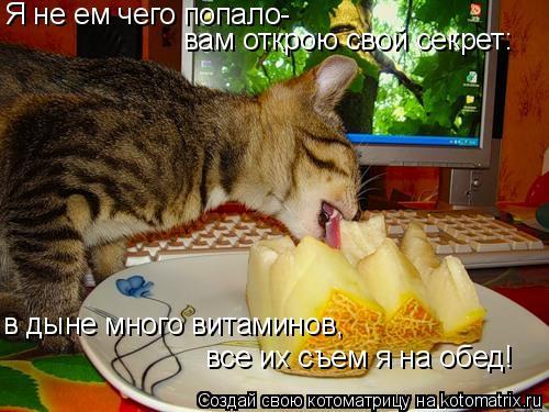 Котоматрица: Я не ем чего попало- вам открою свой секрет: в дыне много витаминов, все их съем я на обед!
