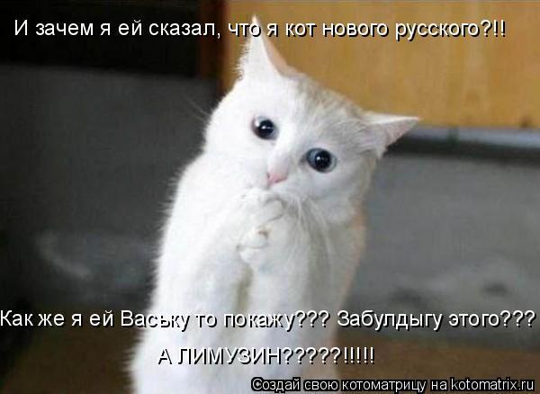 Котоматрица: И зачем я ей сказал, что я кот нового русского?!! Как же я ей Ваську то покажу??? Забулдыгу этого??? А ЛИМУЗИН?????!!!!!