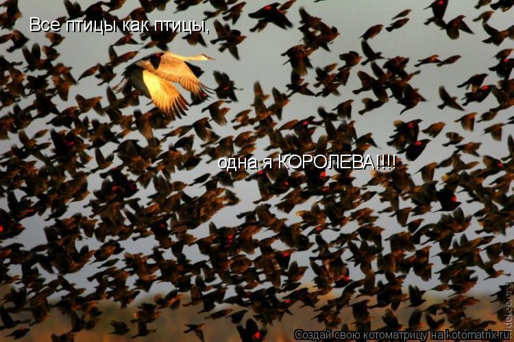 Котоматрица: Все птицы как птицы, одна я КОРОЛЕВА!!!!
