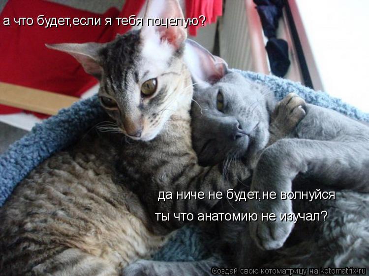 Котоматрица: а что будет,если я тебя поцелую? да ниче не будет,не волнуйся ты что анатомию не изучал?