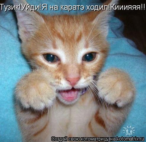 Котоматрица: Тузик!Уйди!Я на каратэ ходил!Кииияяя!!!